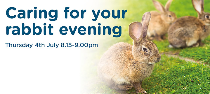 Caring For Your Rabbit Evening