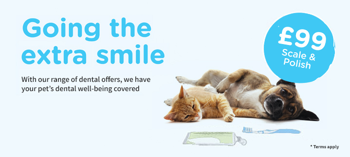 Guide to protecting pets' teeth