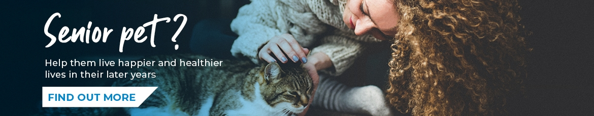 Senior pet? Help them live happier and healthier lives in their later years