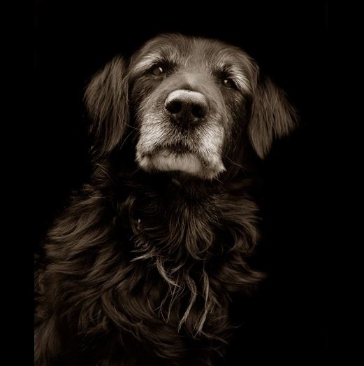 olderdog3