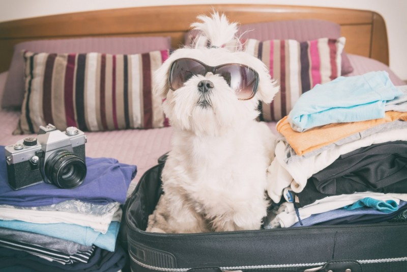 This little chap is waiting for his holiday - but does he have a passport and all vaccinations?
