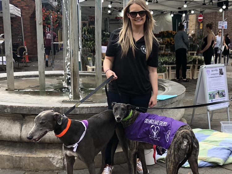 greyhounds by cherrydown vets basildon
