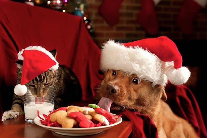 christmas-animals-cherryd-down-vets
