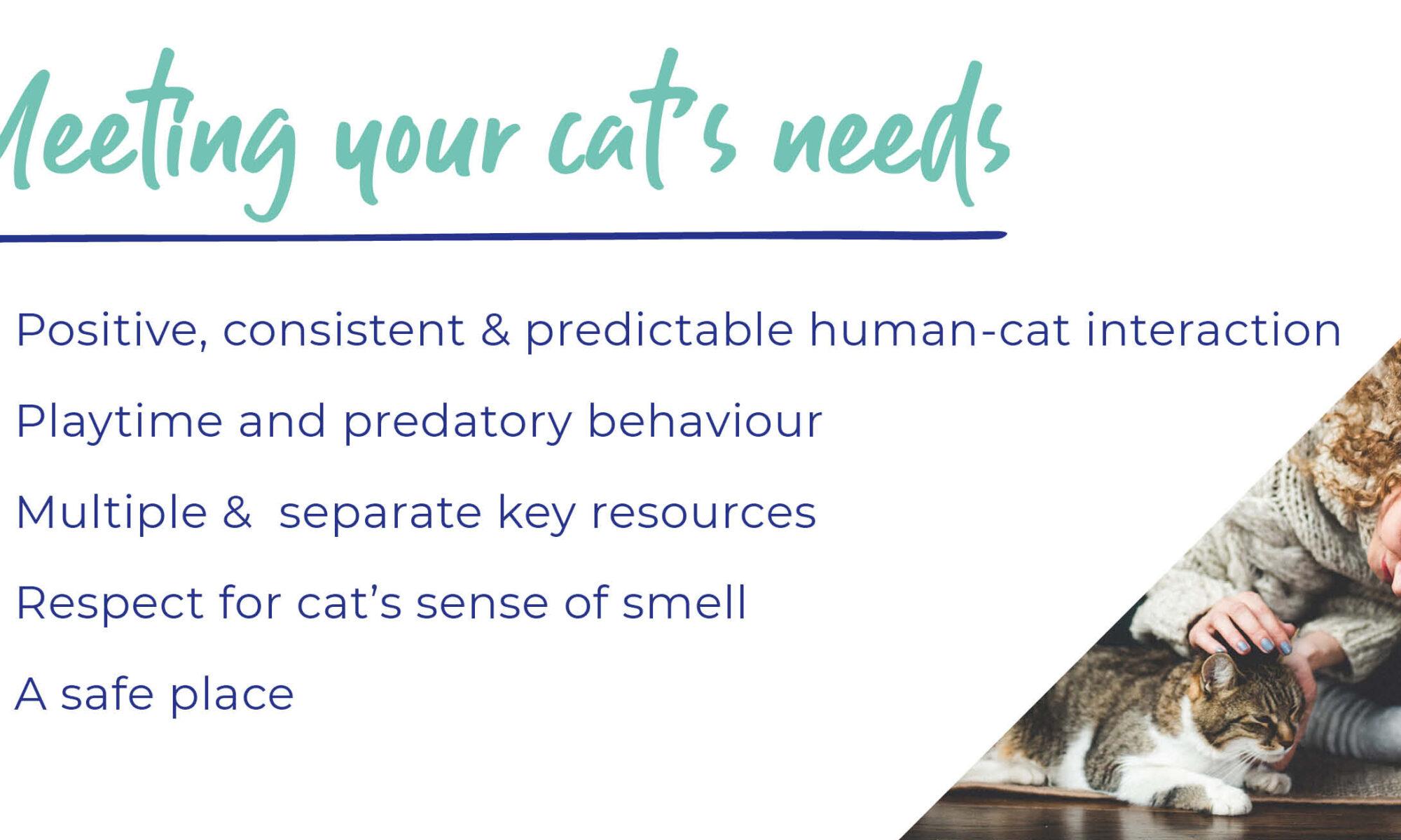 cat-needs