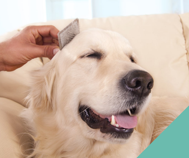 grooming-dog